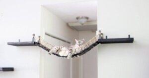La casa cat-friendly