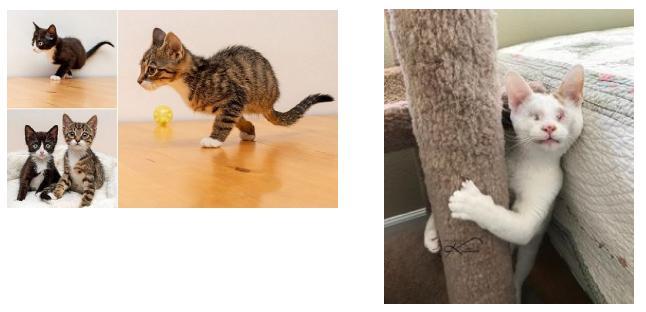 I gatti e la disabilità