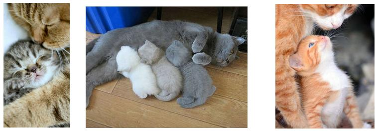 Mamma-gatta ed i cuccioli