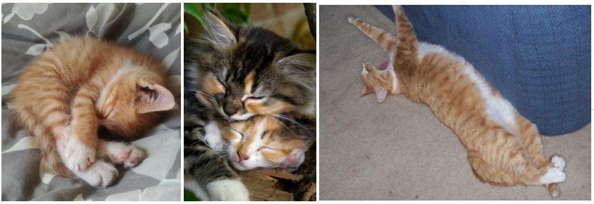 I gatti ed i sogni