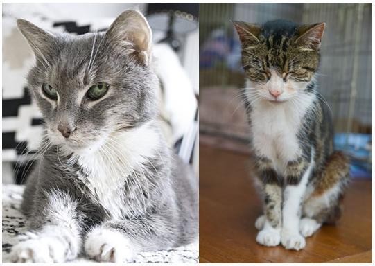 La vecchiaia nel gatto