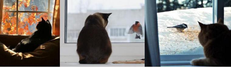 Gatti e cinguettio