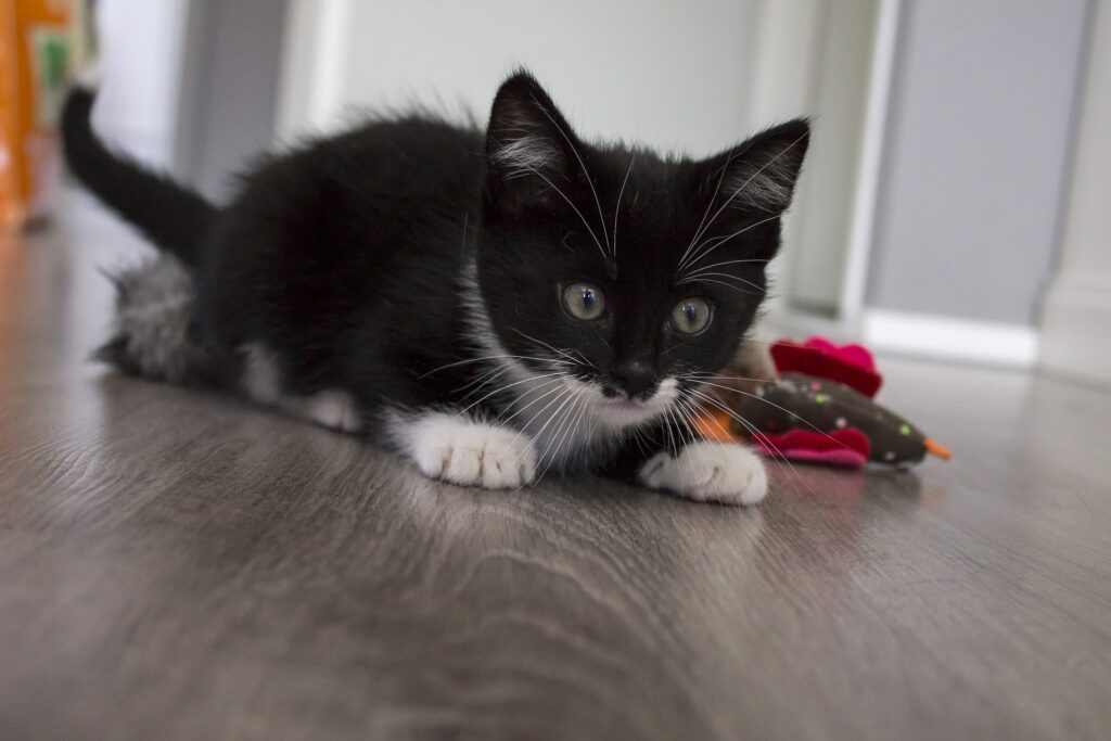 La memoria nel gatto