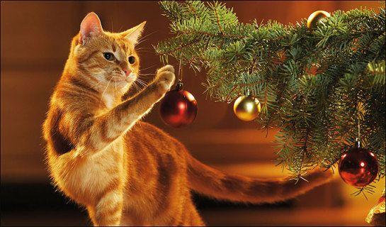 Gatti e Festività natalizie