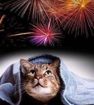 gatto e fuoci d'artificio