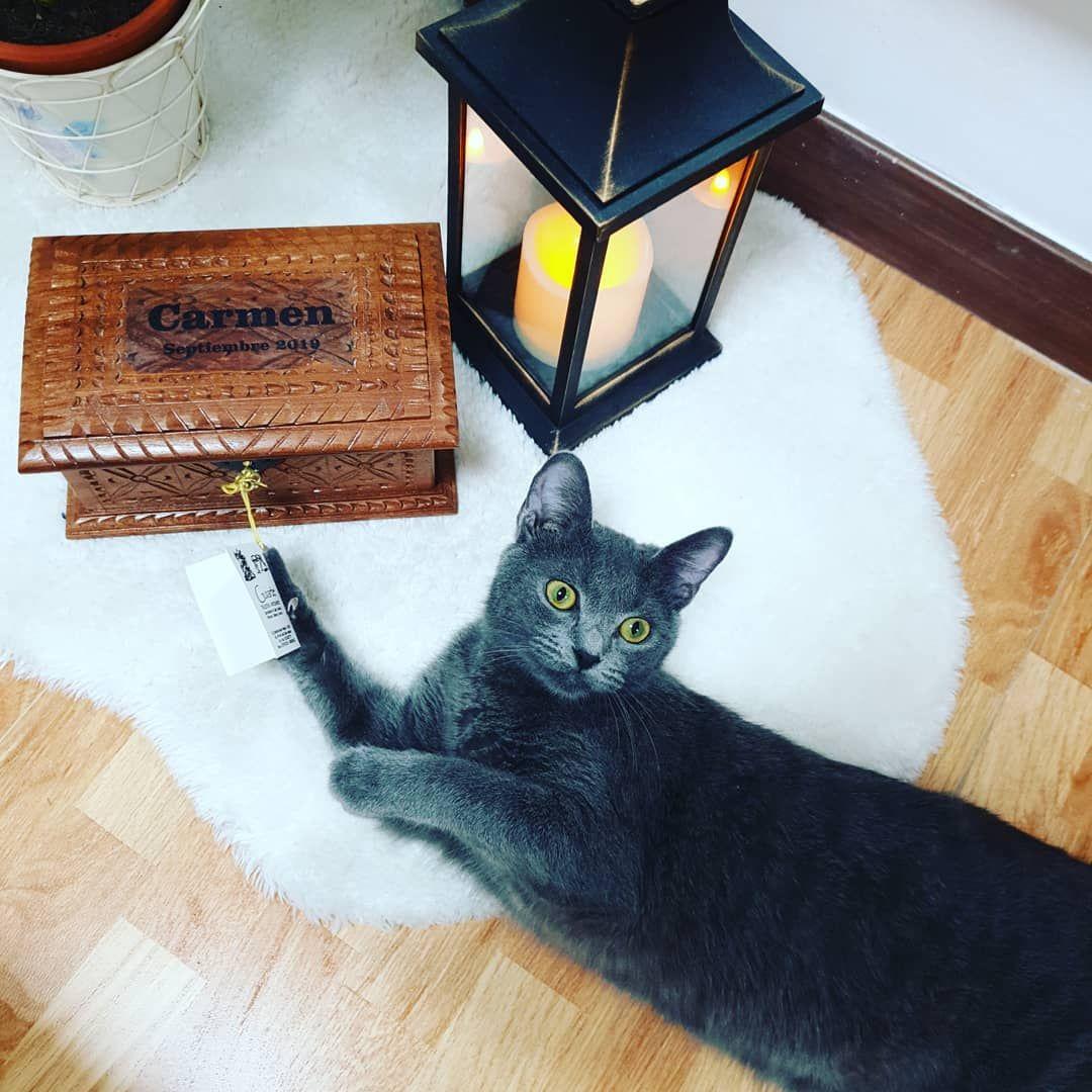 Perché i gatti fanno cadere gli oggetti?