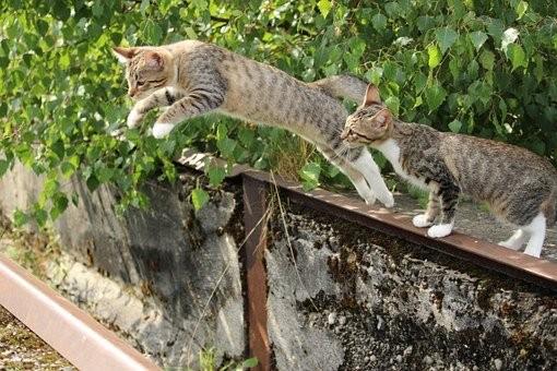 Marsupio primordiale felino